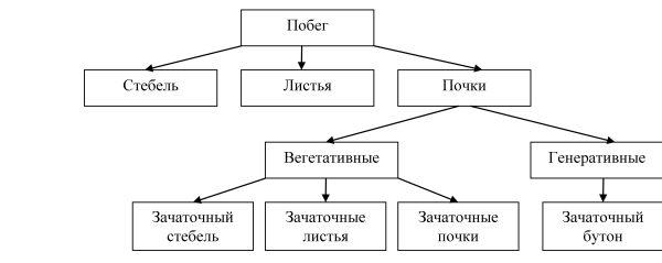 логическая схема.